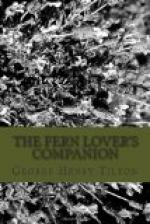 The Fern Lover's Companion by