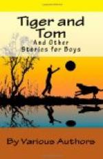 Tiger and Tom and Other Stories for Boys by