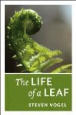 Leaves of Life by