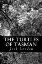 The Turtles of Tasman by Jack London