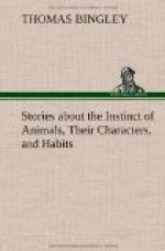 Stories about the Instinct of Animals, Their Characters, and Habits by
