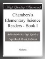 Chambers's Elementary Science Readers by