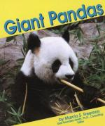 Giant Panda Bear by