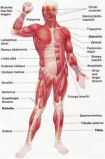 The Body Systems by