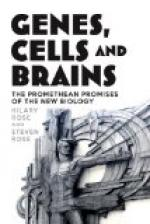 A Study about Brain Cell Function by