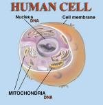 Part of a Cell by