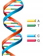 Deoxyribonucleic Acid (Dna) by