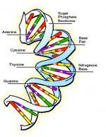 Gene by