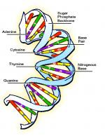 Genetic System by