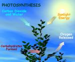 Photosynthesis by