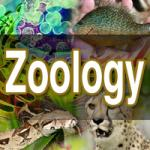 Zoologist by