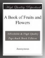 A Book of Fruits and Flowers by