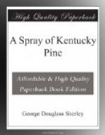 A Spray of Kentucky Pine by