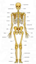 Bone (Skeleton) by Fae Myenne Ng