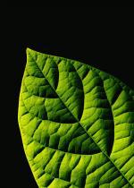 Botany by