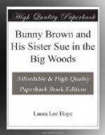 Bunny Brown and His Sister Sue in the Big Woods by Laura Lee Hope