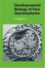 Gametophyte by