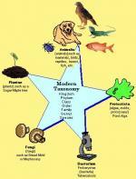 Taxonomy by