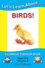 The Curious Book of Birds by