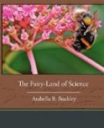The Fairy-Land of Science by