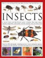 The History of Insects by