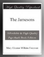 The Jamesons by Mary Eleanor Wilkins Freeman