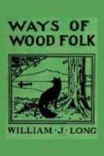 Ways of Wood Folk by
